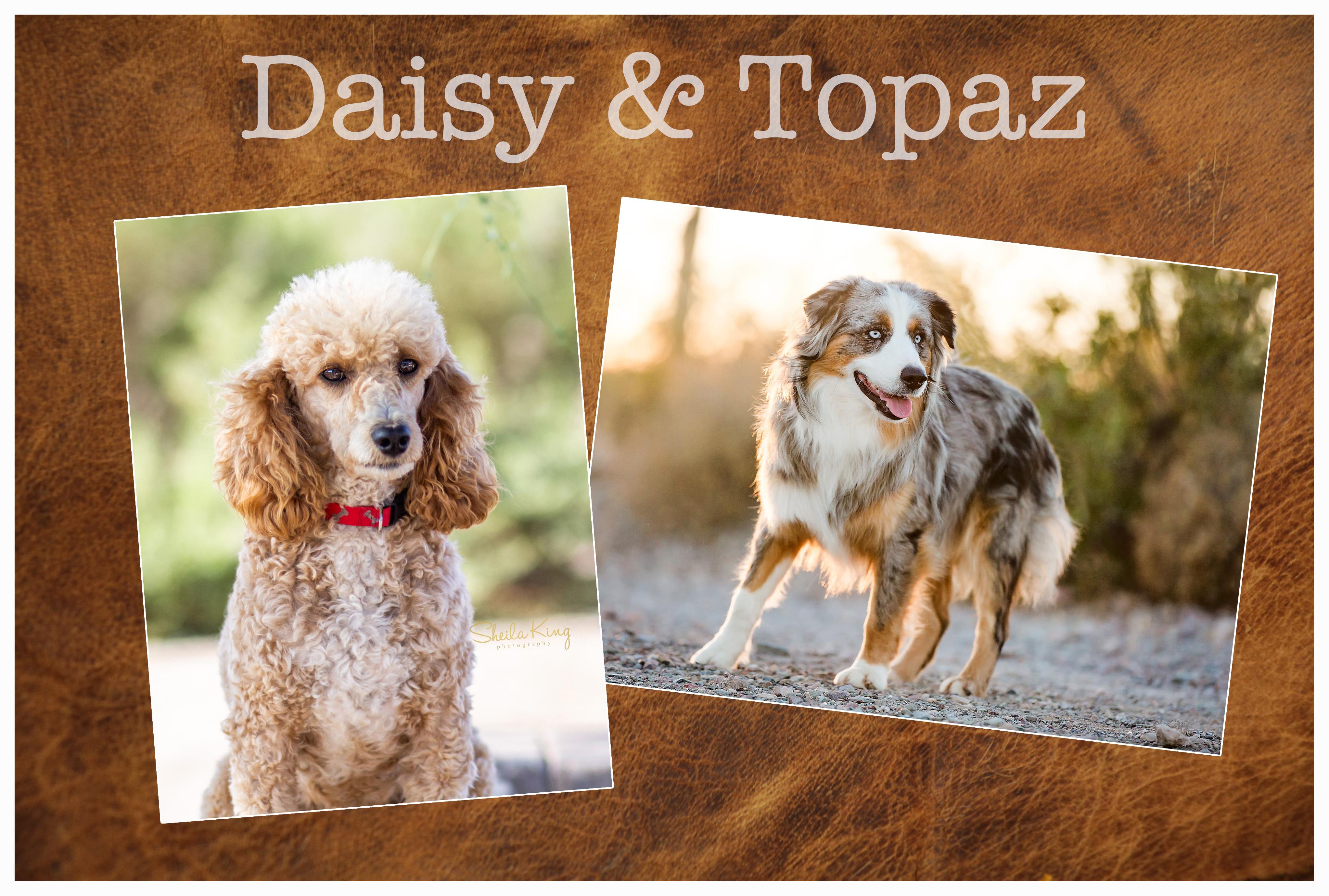 Daisy&Topaz